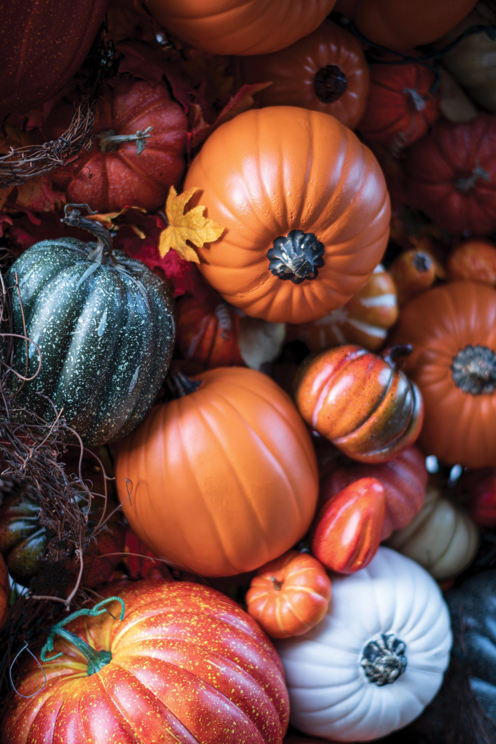 All Our Gratitude: November 2020